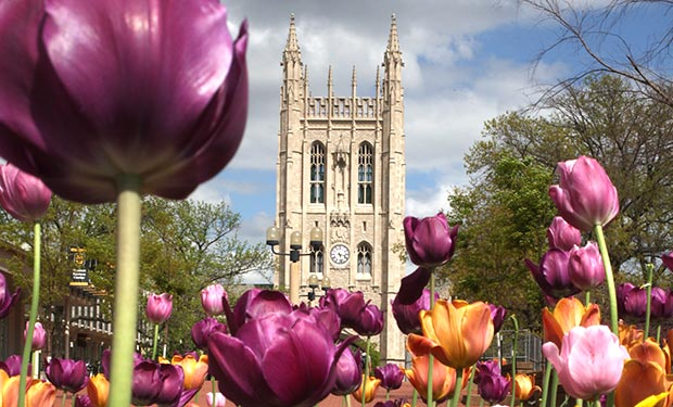 Memorial Union with tulips in foreground