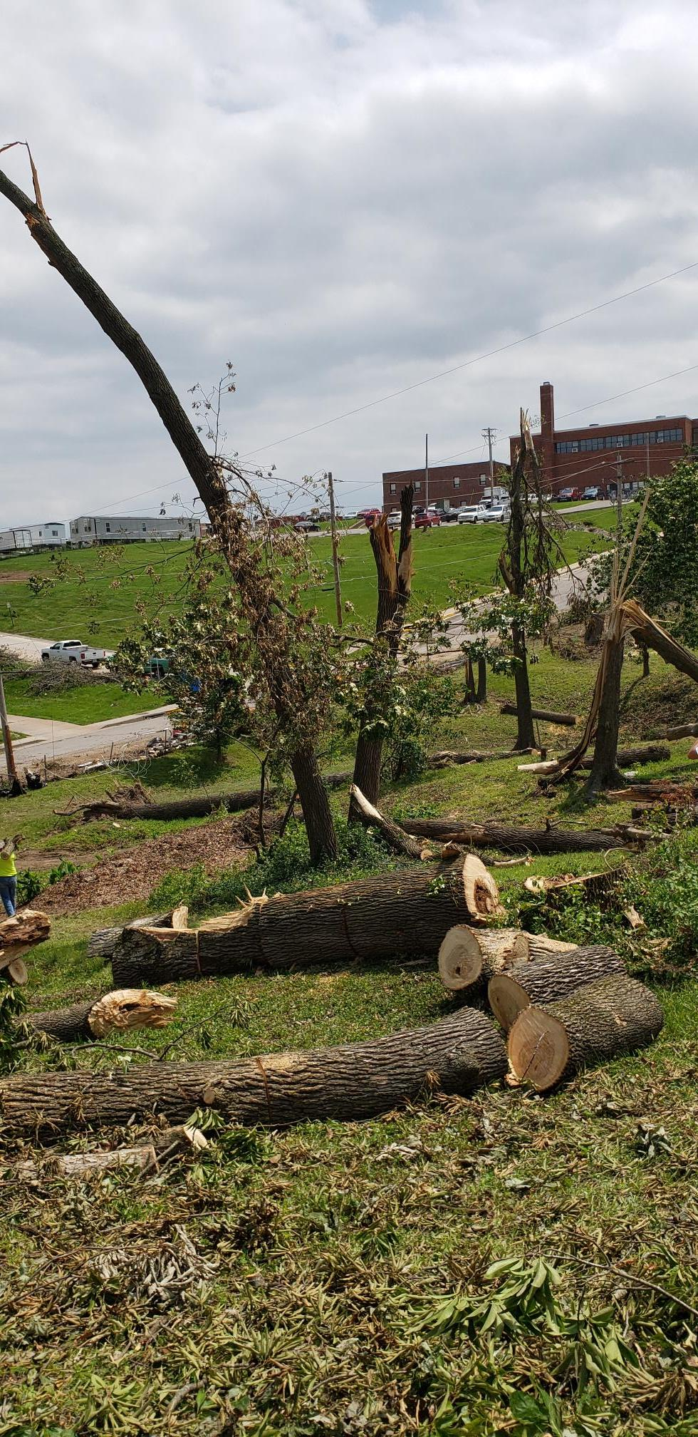 large trees broken and felled by the tornado