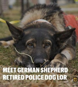 Police Dog Lor